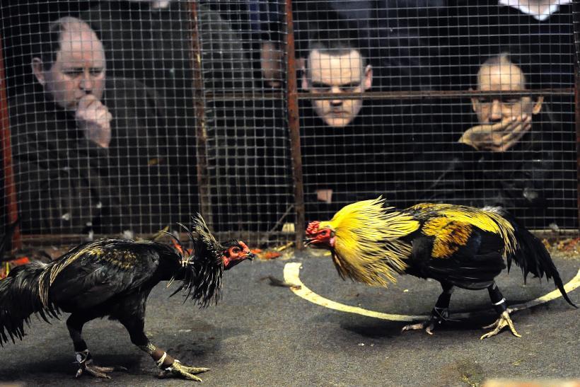 Jenis-jenis Makanan Terbaik untuk Sabung Ayam di Situs S128
